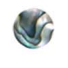 Round - Abalone
